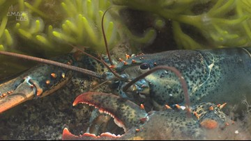 MIT Scientists Are Looking to the Lobster to Create Superhero-Like Armor