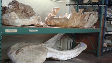 Millions of Years Ago, Texas Was a 'Serengeti' with a Bunch of Exotic Animals