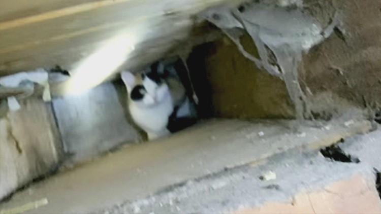 Cat Cavity! A Curious Cat Survived Being Stuck in the Cavity of a House for 3 Weeks!