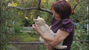 The  'Crazy Cat Lady'  Stereotype Really Don't Exist