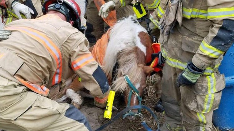 Pony rescued
