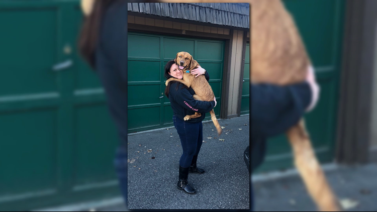 'I got my baby back': Stolen dog reunited with owner on Christmas Eve