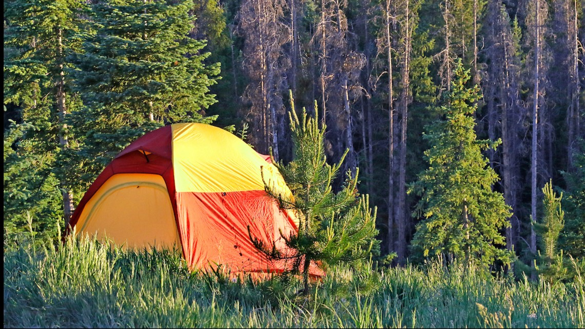 Bear pounces on tent of couple camping south of Colorado ...