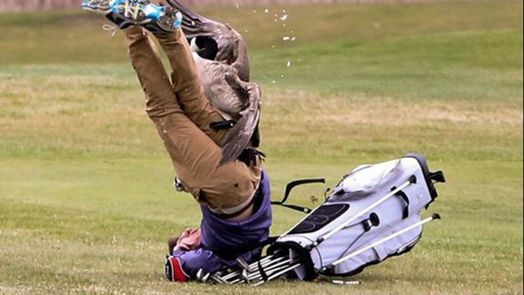 Watch out! Goose attacks high school golfer in MI