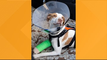Dog thrown from Tennessee overpass recovering