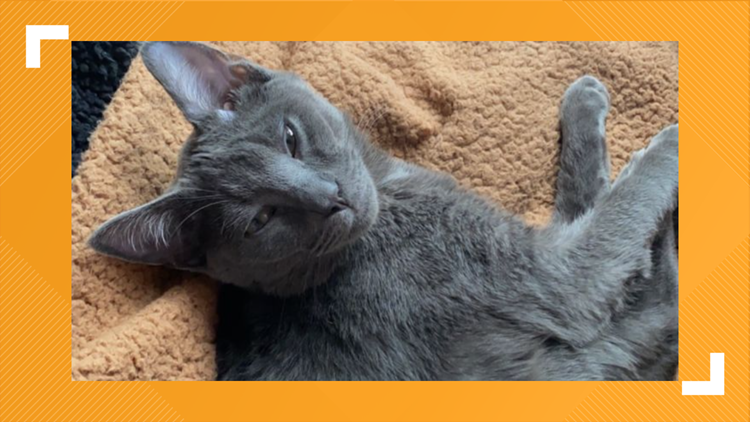 Around $2,000 raised to help kitten after report of animal abuse at University of Tennessee