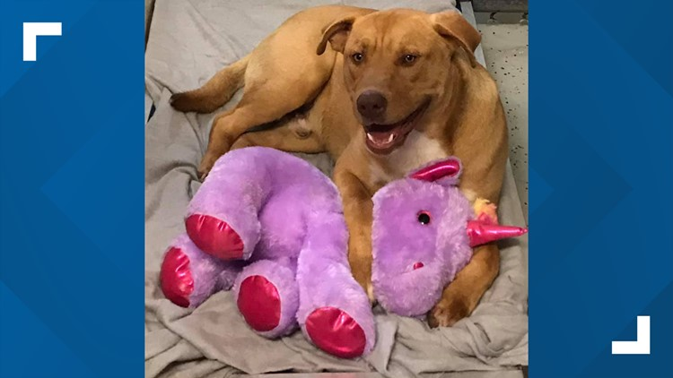 Stray dog kept stealing purple unicorn from Dollar General, animal control officer bought it for him
