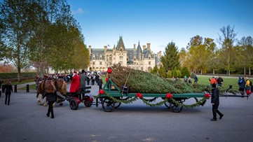 34-foot-tall, 2,000-pound  Christmas tree arrives at the Biltmore House for the holidays