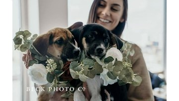 Forget flowers! Bridesmaids carry puppies down the aisle