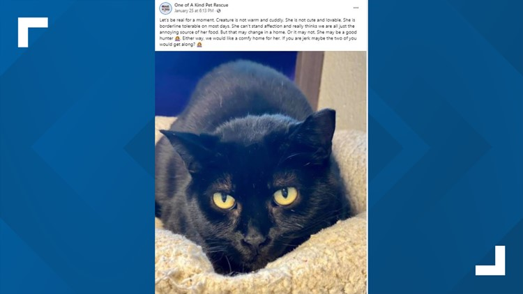 'She can't stand affection': Akron pet rescue looking for perfect 'jerk' to adopt not-so-cuddly cat