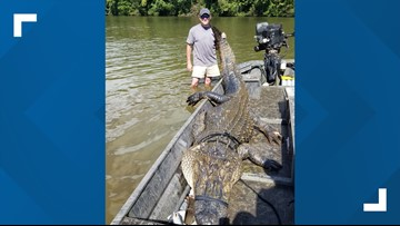 South Carolina hunters catch 12-foot, 726-pound gator