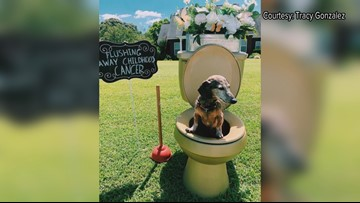 Golden toilet raises money to fight childhood cancer