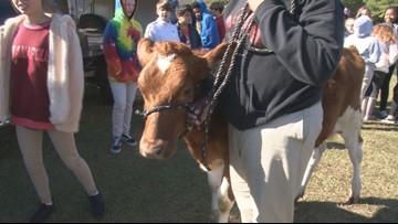 Bibb County Schools plan agriculture arena with renewed ESPLOST