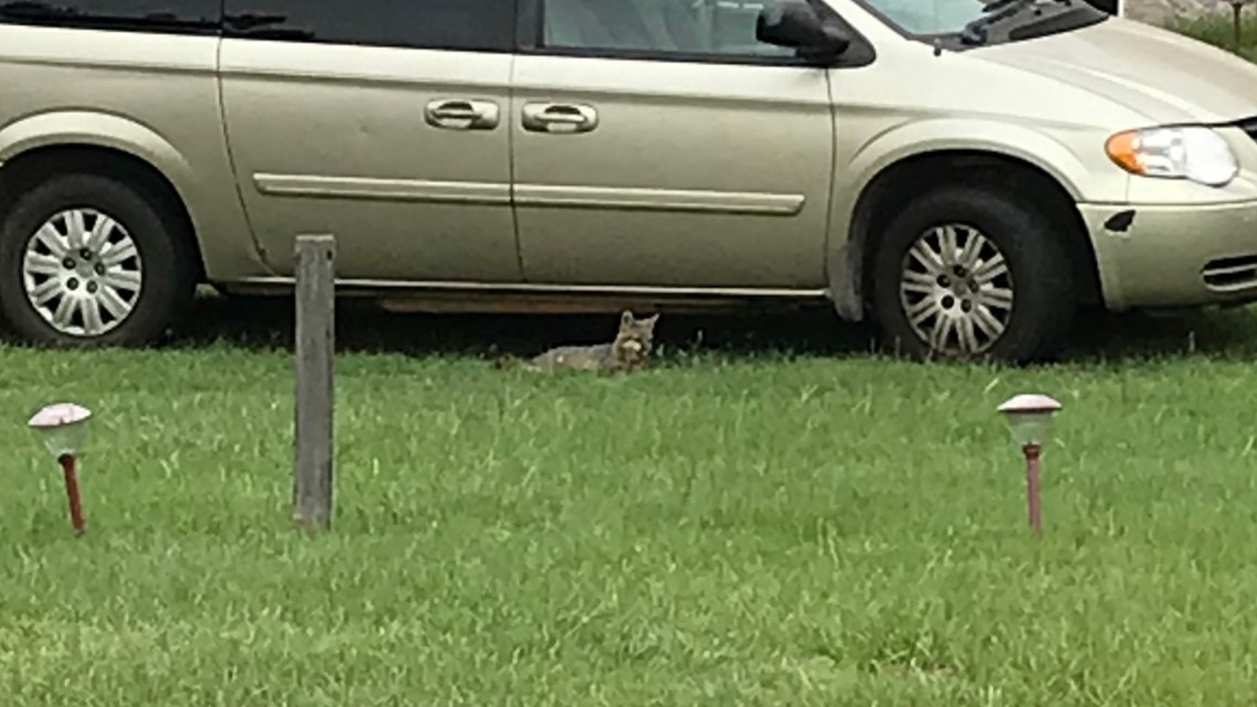 UPDATE: Fox that attacked Crawford County man tests positive for rabies