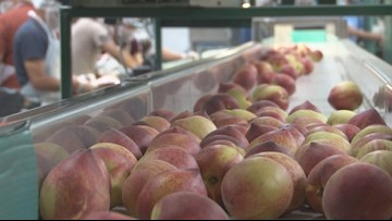 Lane Southern Orchards closes popular catwalk attraction