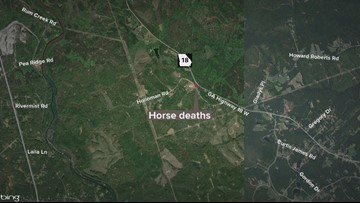 Two horses found shot to death in Jones County