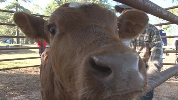 Bleckley County Preschool Farm Day teaches kids about agriculture