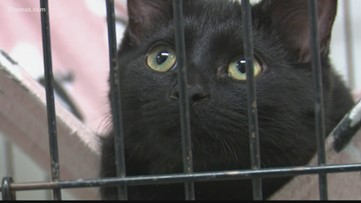 Humane Society urges people to foster animals during COVID-19 outbreak