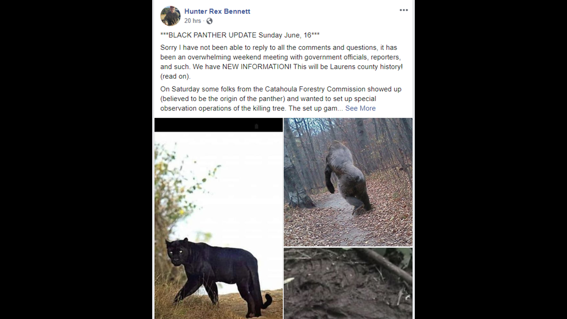VERIFY: Is there a black panther roaming Laurens County?