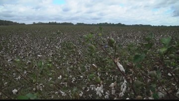 Bleckley farmer prepares for 2019 cotton crop