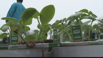 Forsyth church makes garden to feed hungry