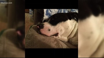 Judge says Crawford County health official not responsible for dog's beheading
