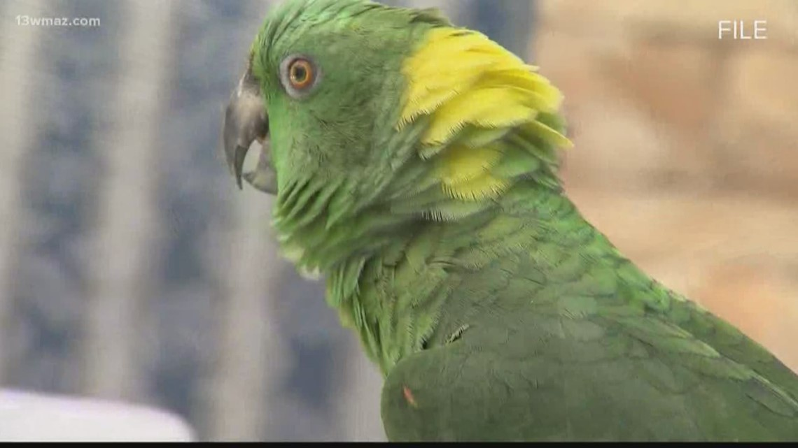 Potty-mouthed parrot leads to Wheeler County meth bust