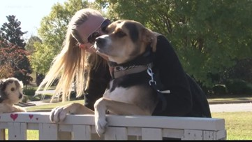 'Homes for Dogs' event promotes adoption