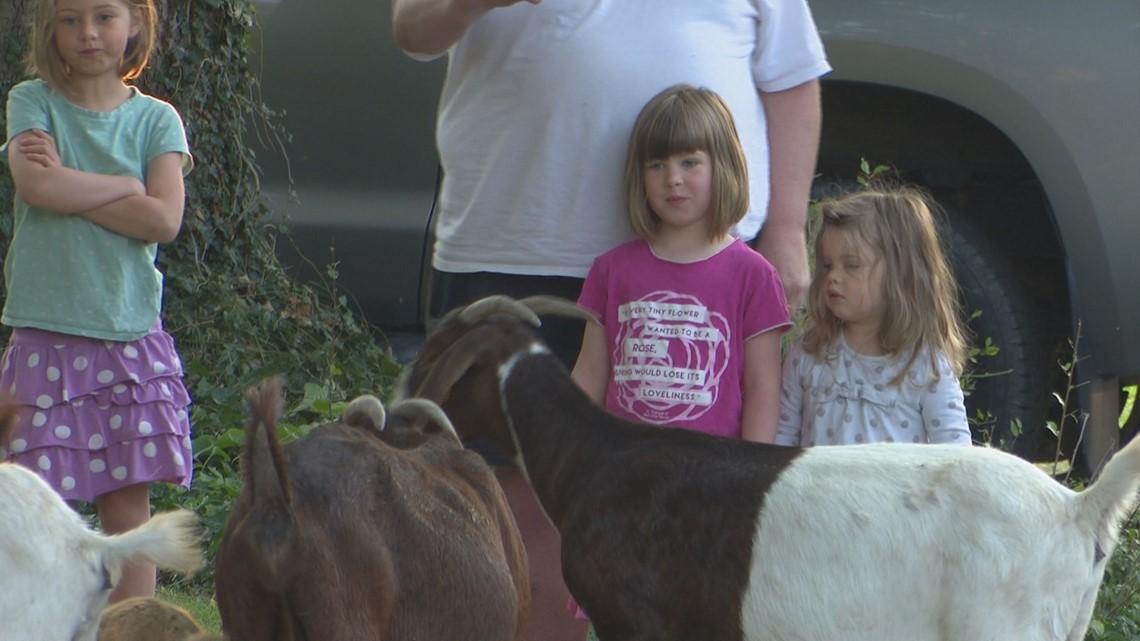Baaaaaaad Boys: Goats Take Over Boise Neighborhood