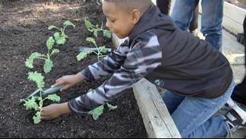 From farm to school: Alexander II students grow kale with Master Gardeners