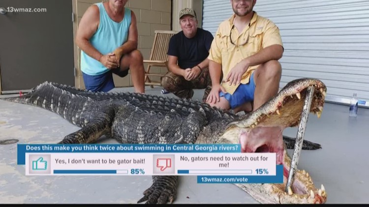 Telfair Men Catch 13 Foot Gator After Hours Of Trying To Subdue The