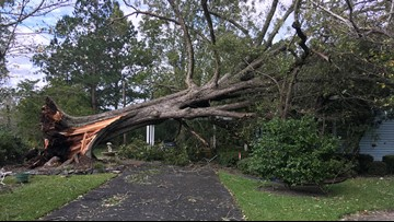 Hurricane Michael knocks century-old pecan tree onto 100-year-old's home in Dodge Co.
