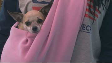 Veterans take home life-long friends at Pets for Vets