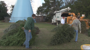 'They give us so much': Warner Robins recycles Christmas trees
