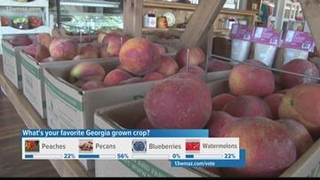 Georgia peach crop looking its best in years