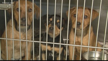 Georgia issues 'stop order' to Bibb County animal shelter
