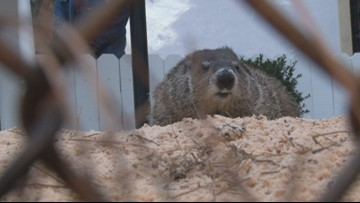 'I have a huge respect for groundhogs:' Folks gather around Beauregard Lee for weather prediction