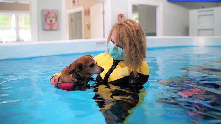 New dog aquatic wellness center opens in north Macon