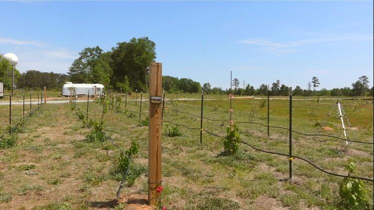 Jail Creek Farms Winery opens in Jeffersonville (Twiggs County)