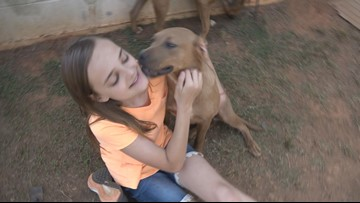 'Just spend time with them:' Monroe County Animal Shelter in need of volunteers