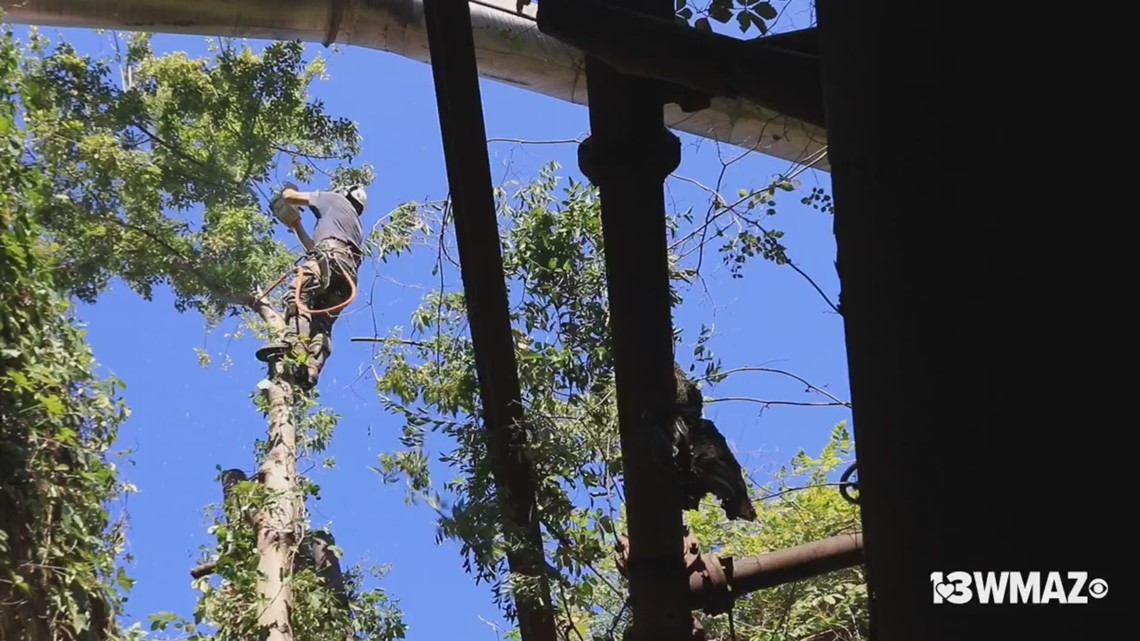Tree removal at Willingham Sash & Door Company