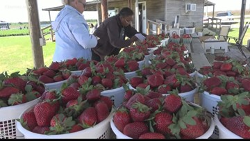 Georgia Strawberry Festival in Reynolds takes place April 27