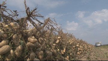 Hawkinsville peanut farmer talks President Jimmy Carter's agricultural roots
