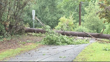 Strong storm knocks down trees in Central Georgia