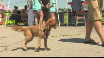 Food drive collects pet food for hungry animals