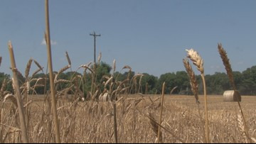 Farmers face off with the dry, hot weather