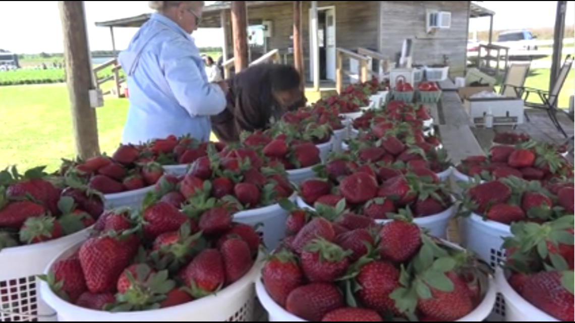 Georgia Strawberry Festival coming to Reynolds April 27