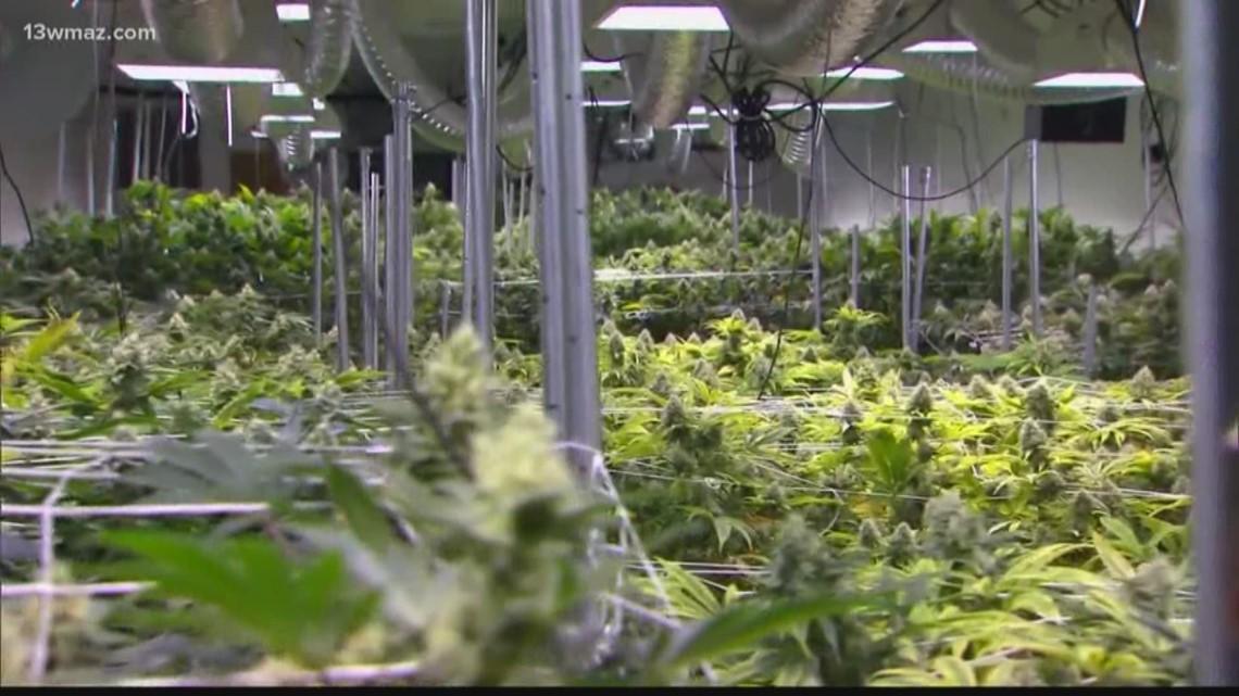 Marijuana decriminalization town hall held by Bibb County commission