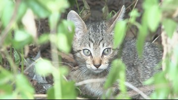 Milledgeville man says he was refused animal control service