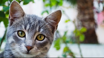 Third cat tests positive for bubonic plague during six-month span in Wyoming